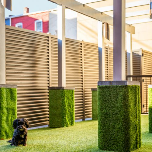 photo of the dog park at Jefferson MarketPlace apartments with astro turf area and small black dog sitting down.